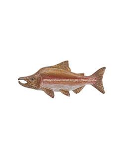 Humpback  Salmon Pin
