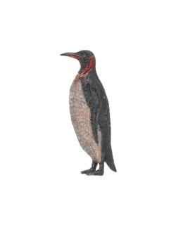 King Penguin Pin