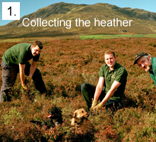 Collecting the Heather