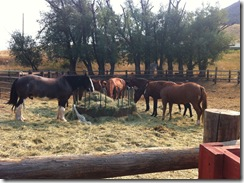 Horses in Chico Springs, MT
